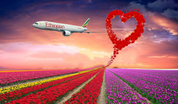 Ethiopian Cargo Transports More than 95 Million Stems of Flowers for Valentine's Season